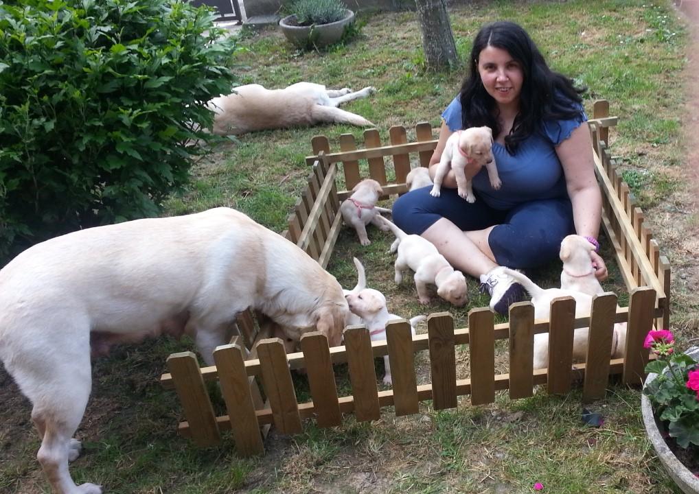I labrador di Cinzia
